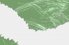 Green Grunge Free Vector