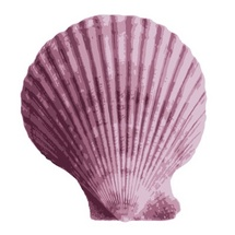 Vector Shell
