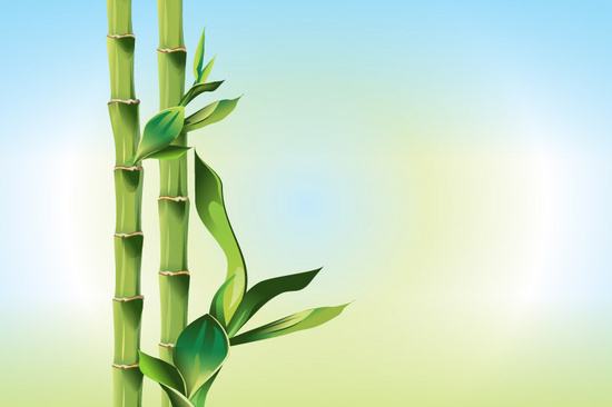 Bamboo Organic Nature Background