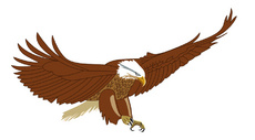 Flying American Eagle Vector