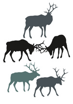 Vector North American Elks